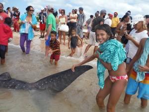 la queue du requin