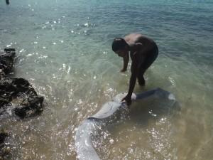 le foie du requin